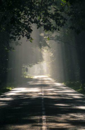 Encuentra el camino de tu vida